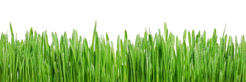 Услуги озеленения территории