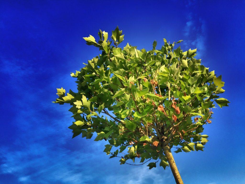 Цены на посадку деревьев