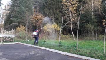 Осенняя обработка деревьев от вредителей
