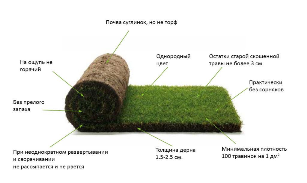 Услуга укладки рулонных газонов в Москве