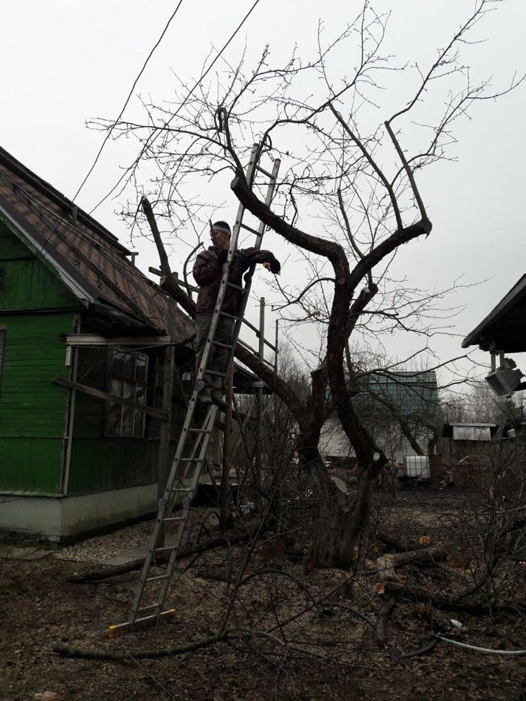 Зимняя обрезка деревьев