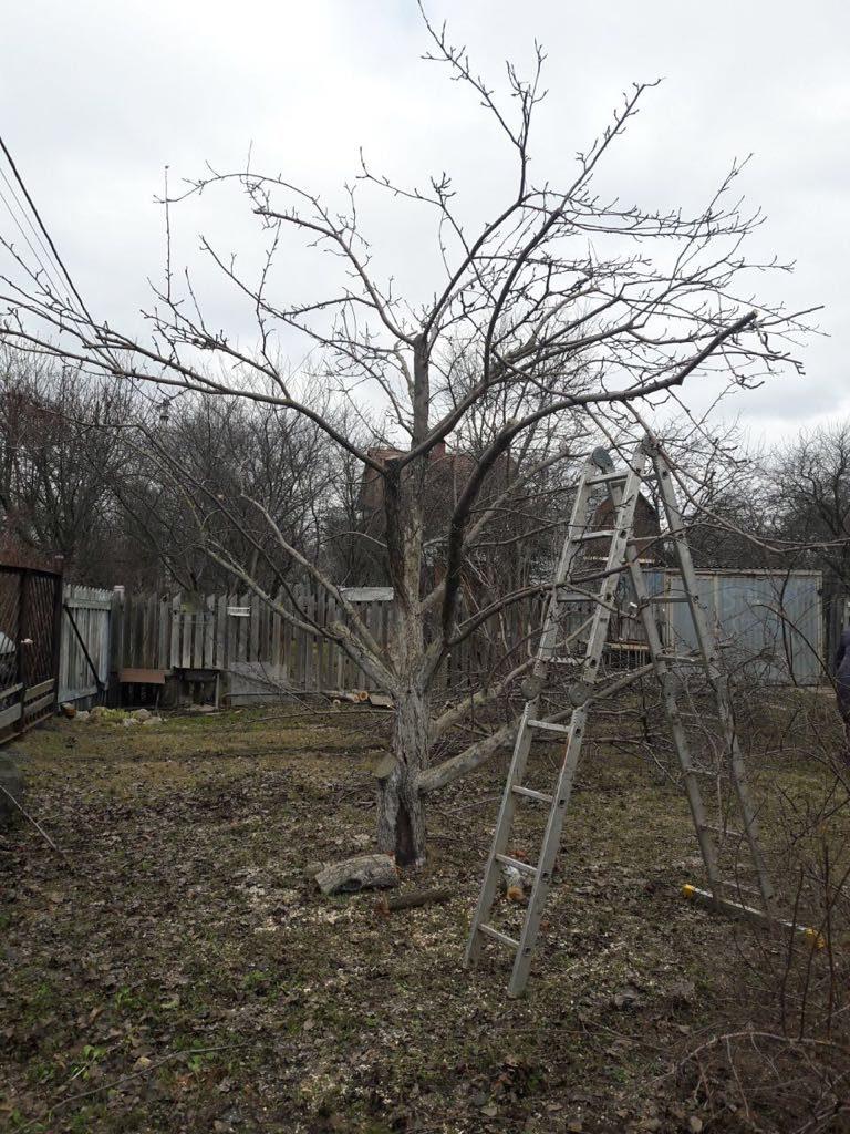 обрезка деревьев на заказ
